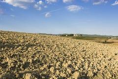 αγροτικός αμπελώνας τοπί&o Στοκ Εικόνες