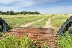 Αγροτικός δρόμος και φρουρά βοοειδών Στοκ φωτογραφίες με δικαίωμα ελεύθερης χρήσης