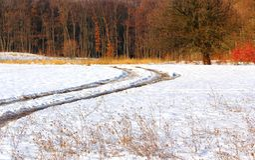 Αγροτικός δρόμος προς το δάσος Στοκ φωτογραφίες με δικαίωμα ελεύθερης χρήσης