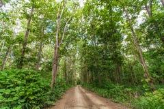 Αγροτικός δρόμος στη ζούγκλα στοκ εικόνες με δικαίωμα ελεύθερης χρήσης
