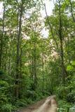 Αγροτικός δρόμος στη ζούγκλα στοκ εικόνες