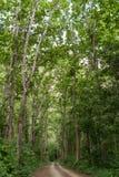 Αγροτικός δρόμος στη ζούγκλα στοκ φωτογραφίες