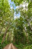 Αγροτικός δρόμος στη ζούγκλα στοκ φωτογραφία με δικαίωμα ελεύθερης χρήσης