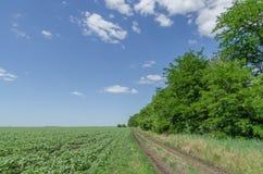 Αγροτικός δρόμος στον πράσινο τομέα Στοκ Εικόνα