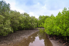 Αγροτικός θερινός ποταμός τοπίων ποταμών Στοκ εικόνες με δικαίωμα ελεύθερης χρήσης
