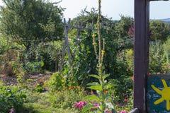 αγροτικός κήπος εξοχικών σπιτιών στην καυτή θερινή ημέρα του Ιουλίου Στοκ εικόνα με δικαίωμα ελεύθερης χρήσης