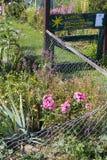 αγροτικός κήπος εξοχικών σπιτιών στην καυτή θερινή ημέρα του Ιουλίου και των επιστολών garte Στοκ εικόνες με δικαίωμα ελεύθερης χρήσης