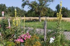 αγροτικός κήπος εξοχικών σπιτιών στην καυτή θερινή ημέρα του Ιουλίου Στοκ εικόνες με δικαίωμα ελεύθερης χρήσης