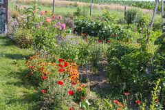 αγροτικός κήπος εξοχικών σπιτιών στην καυτή θερινή ημέρα του Ιουλίου Στοκ Εικόνες