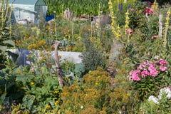 αγροτικός κήπος εξοχικών σπιτιών στην καυτή θερινή ημέρα του Ιουλίου Στοκ Εικόνα