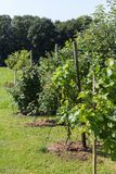 αγροτικός κήπος εξοχικών σπιτιών στην καυτή θερινή ημέρα του Ιουλίου Στοκ Φωτογραφία