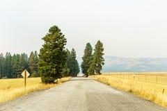 Αγροτικός κίτρινος τομέας θερινών τοπίων εθνικών οδών και πράσινα δέντρα με την αιθαλομίχλη στον αέρα Στοκ φωτογραφία με δικαίωμα ελεύθερης χρήσης