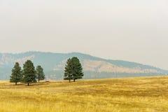 Αγροτικός κίτρινος τομέας θερινών τοπίων και πράσινα δέντρα με την αιθαλομίχλη στον αέρα Στοκ φωτογραφία με δικαίωμα ελεύθερης χρήσης