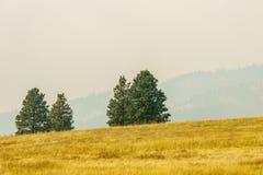 Αγροτικός κίτρινος τομέας θερινών τοπίων και πράσινα δέντρα με την αιθαλομίχλη στον αέρα Στοκ Φωτογραφίες