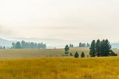 Αγροτικός κίτρινος τομέας θερινών τοπίων και πράσινα δέντρα με την αιθαλομίχλη στον αέρα Στοκ Φωτογραφία
