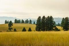 Αγροτικός κίτρινος τομέας θερινών τοπίων και πράσινα δέντρα με την αιθαλομίχλη στον αέρα Στοκ εικόνα με δικαίωμα ελεύθερης χρήσης