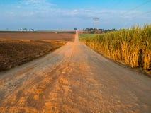 Αγροτικός πορτοκαλής βρώμικος δρόμος με το μπλε ουρανό στη φυτεία καλάμων ζάχαρης στοκ εικόνες