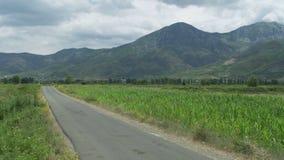 Αγροτικός δρόμος μεταξύ των φυτευμένων τομέων απόθεμα βίντεο