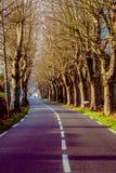 Αγροτικός δρόμος με τα υψηλά δέντρα και στις δύο πλευρές Στοκ εικόνα με δικαίωμα ελεύθερης χρήσης