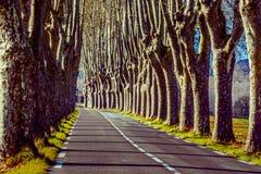 Αγροτικός δρόμος με τα υψηλά δέντρα και στις δύο πλευρές Στοκ Εικόνες