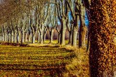 Αγροτικός δρόμος με τα υψηλά δέντρα και στις δύο πλευρές Στοκ εικόνες με δικαίωμα ελεύθερης χρήσης