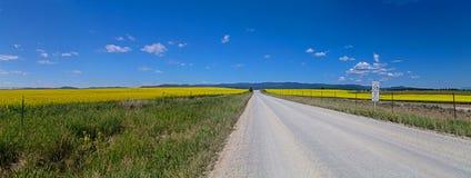 Αγροτικός δρόμος που διχοτομεί έναν τομέα Canola Στοκ Εικόνες
