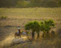 Αγροτικός δρόμος στο ηλιοβασίλεμα σε Bagan, το Μιανμάρ Στοκ Εικόνα