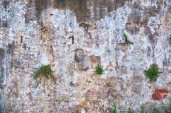 Αγροτικός τοίχος στοκ φωτογραφία με δικαίωμα ελεύθερης χρήσης