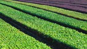 Αγροτικός τομέας με τις πράσινες σειρές Στοκ εικόνα με δικαίωμα ελεύθερης χρήσης
