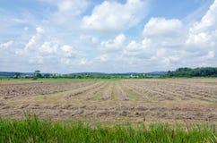 Αγροτικός τομέας Στοκ εικόνα με δικαίωμα ελεύθερης χρήσης