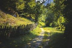 αγροτικός τρόπος στα πράσινα ξύλα Στοκ φωτογραφίες με δικαίωμα ελεύθερης χρήσης