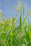 αγροτικός Στοκ εικόνες με δικαίωμα ελεύθερης χρήσης