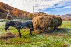 αγροτικός στοκ φωτογραφία