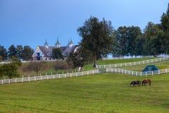 αγροτικό άλογο βραδιού Στοκ Εικόνες