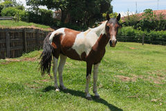 αγροτικό άλογο Στοκ εικόνα με δικαίωμα ελεύθερης χρήσης