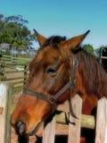 Αγροτικό άλογο στοκ φωτογραφίες