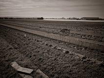 Αγροτικό έδαφος γεωργίας Στοκ Εικόνες