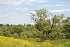 Αγροτικό δέντρο ιτιών τοπίων μεγάλο Στοκ Εικόνες