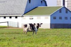 αγροτικό γάλα στοκ εικόνα