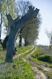 αγροτικό δέντρο εθνικών ο&d Στοκ φωτογραφία με δικαίωμα ελεύθερης χρήσης