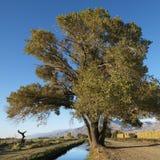 αγροτικό δέντρο κολπίσκ&omicr Στοκ Φωτογραφίες