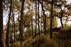αγροτικό δέντρο προτύπων Στοκ φωτογραφία με δικαίωμα ελεύθερης χρήσης