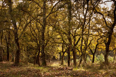 αγροτικό δέντρο προτύπων Στοκ φωτογραφίες με δικαίωμα ελεύθερης χρήσης