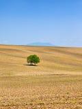 αγροτικό δέντρο τοπίων Στοκ εικόνες με δικαίωμα ελεύθερης χρήσης