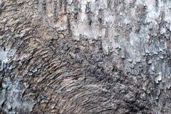 Αγροτικό δέντρο φλοιών Στοκ εικόνα με δικαίωμα ελεύθερης χρήσης