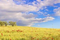 Αγροτικό ελατήριο τοπίων Μεταξύ Apulia και του Βασιλικάτα Στοκ Εικόνα