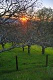 αγροτικό ηλιοβασίλεμα στοκ εικόνα