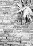 Αγροτικό θέμα χωρών Λεπτομέρεια του τοίχου brik με τα corncobs & x28 Γραπτός & x29  Στοκ φωτογραφία με δικαίωμα ελεύθερης χρήσης