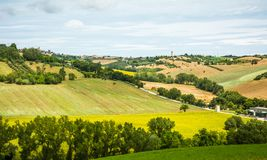 Αγροτικό θερινό τοπίο με τους τομείς ηλίανθων και τους τομείς ελιών κοντά στο Πόρτο Recanati στην περιοχή του Marche, της Ιταλίας Στοκ φωτογραφία με δικαίωμα ελεύθερης χρήσης