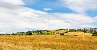 Αγροτικό θερινό τοπίο με τους τομείς ηλίανθων και τους τομείς ελιών κοντά στο Πόρτο Recanati στην περιοχή του Marche, της Ιταλίας Στοκ Εικόνα